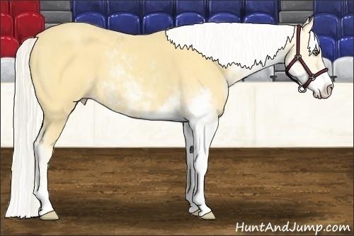 Horse Color:Silver Amber Cream Champagne Sabino