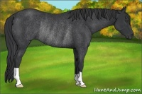Horse Color:Black Rabicano