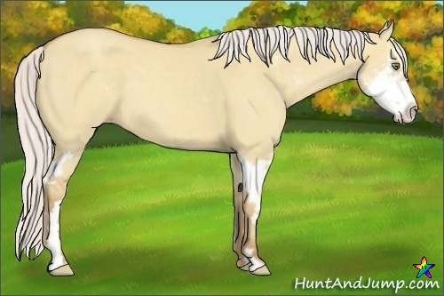Horse Color:Silver Classic Champagne Dun Sabino Splash Frame