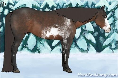 Horse Color:Liver Chestnut Sabino Splash Frame