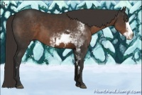 Horse Color:Liver Chestnut Sabino Splash Frame