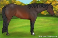 Horse Color:Brown