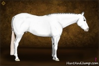 Horse Color:Red Roan Splash Appaloosa Rabicano
