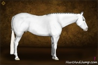 Horse Color:White Spotted Liver Red Dun Pearl Sabino Splash Appaloosa