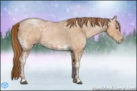 Horse Color:Bay Ice Pearl