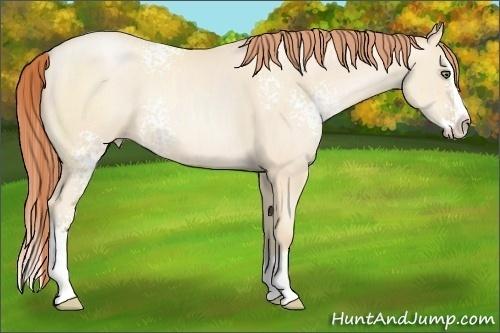 Horse Color:White Spotted Amber Cream Champagne Pearl Sabino Splash Rabicano