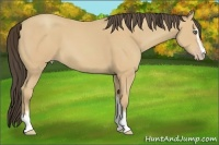 Horse Color:Amber Cream Champagne Sabino