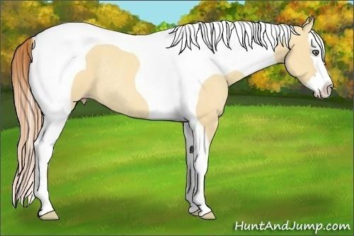 Horse Color:Gold Champagne Dun Splash Tobiano Rabicano