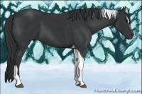 Horse Color:Black Sabino Tobiano
