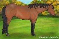 Horse Color:Bay Frame