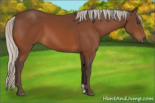 MW Chestnuts Roast | HuntAndJump.com: Every Horse A Puzzle - photo#17