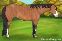 Horse Color:Bay Splash Frame  Brindle
