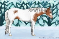 Horse Color:White Spotted Silver Bay Splash Tobiano Frame