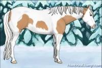 Horse Color:Silver Bay Splash Tobiano