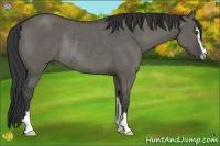 Horse Color:Grullo Sabino Rabicano