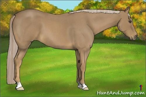 Horse Color:Palomino Roan