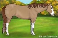 Horse Color:Red Dun Splash