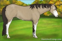 Horse Color:Liver Red Dun Roan Sabino