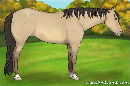 Horse Color:Amber Champagne Dun
