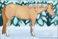 Horse Color:Gold Champagne Tobiano