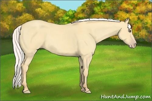 Horse Color:Silver Amber Cream Champagne Dun