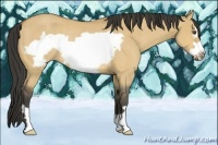 Horse Color:Buckskin Dun Frame Rabicano