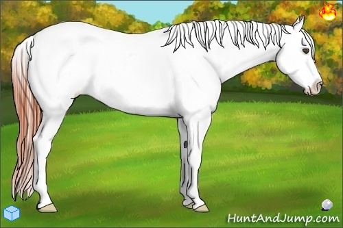 Horse Color:Brown Ice Appaloosa