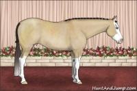 Horse Color:Classic Champagne Dun Splash Rabicano