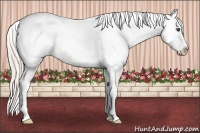 Horse Color:Silver Grullo Sabino Appaloosa