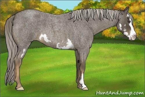 Horse Color:Chocolate Palomino Roan Sabino Splash Frame