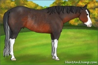 Horse Color:Brown Splash Rabicano
