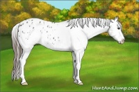 Horse Color:White Spotted Grullo Appaloosa