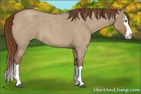 Horse Color:Red Dun Roan Splash