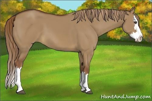 Horse Color:Red Dun Sabino Splash