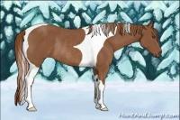 Horse Color:Chestnut Tobiano Rabicano