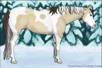 Horse Color:Classic Champagne Dun Splash Tobiano