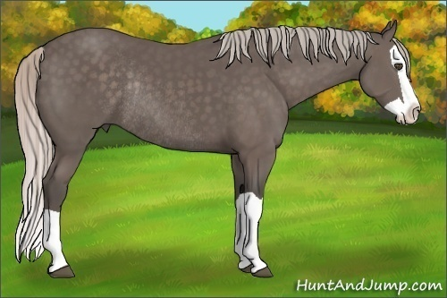 Horse Color:Silver Black Splash Rabicano