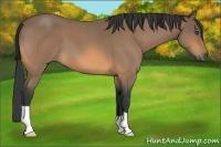 Horse Color:Buckskin Roan
