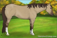 Horse Color:Liver Red Dun
