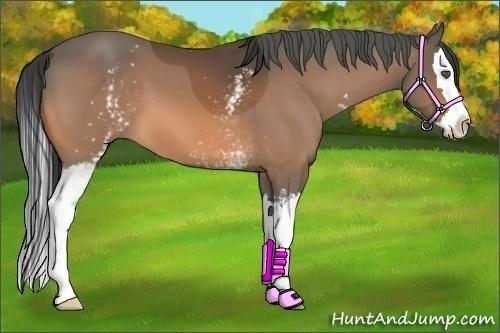 Horse Color:White Spotted Buckskin Splash