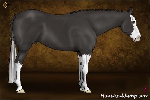 Horse Color:Liver Chestnut Sabino Splash