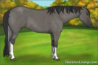 Horse Color:Grullo Roan Tobiano