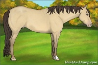 Horse Color:Amber Cream Champagne Dun