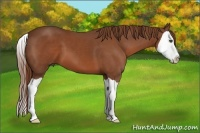 Horse Color:Chestnut Splash