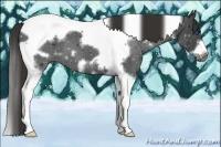 Horse Color:Liver Chestnut Splash Tobiano Frame