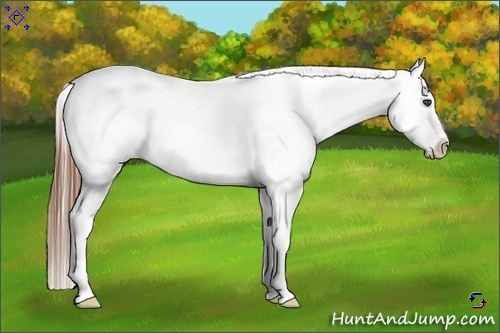 Horse Color:Red Roan Appaloosa Rabicano