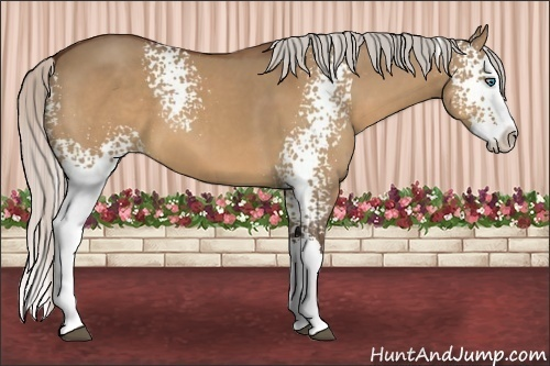 Horse Color:White Spotted Silver Bay Dun Splash