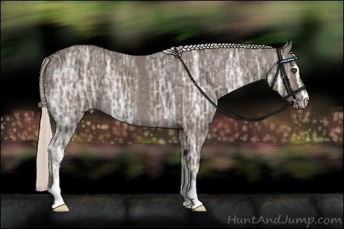 Horse Color:Silver Black Ice Sabino Rabicano