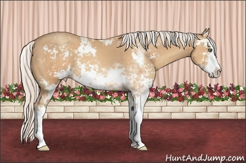 Horse Color:Silver Amber Champagne Sabino