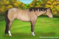 Horse Color:Amber Champagne Rabicano